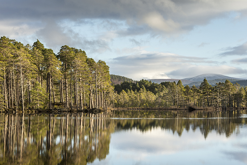 Loch Mallachie in the Cairngorms. Photo © Jan Holm | Shutterstock