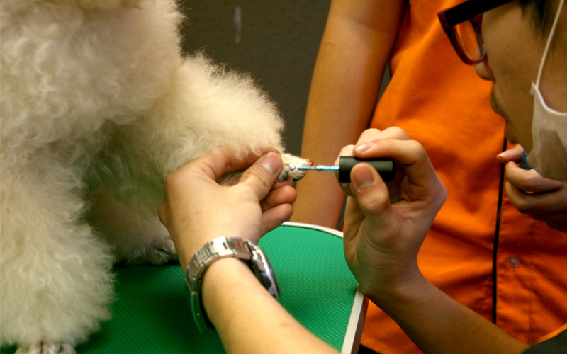 Fancy a pedicure for your pet? A royal treatment only at Petsmore!