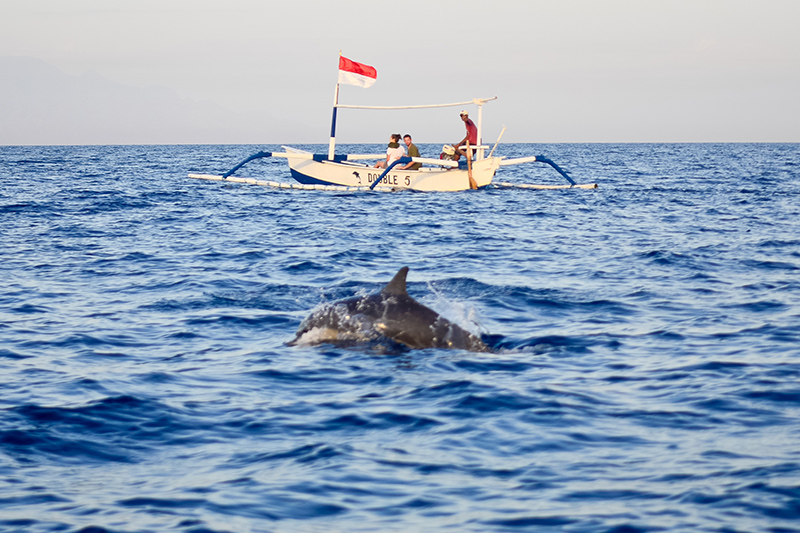 Dolphin-watching at Lovina. Photo © cesc_assawin | Shutterstock