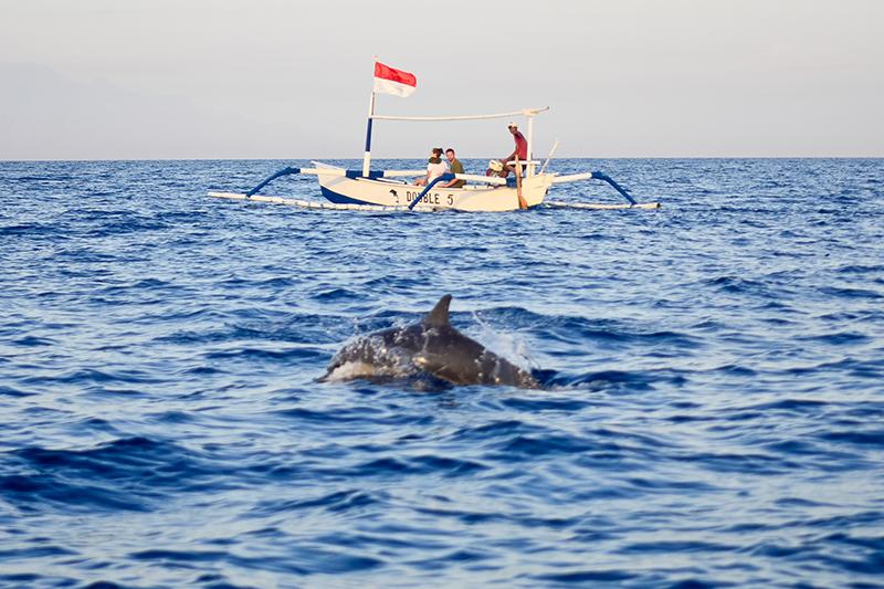 Dolphin-watching at Lovina. Photo © cesc_assawin | Shutterstock