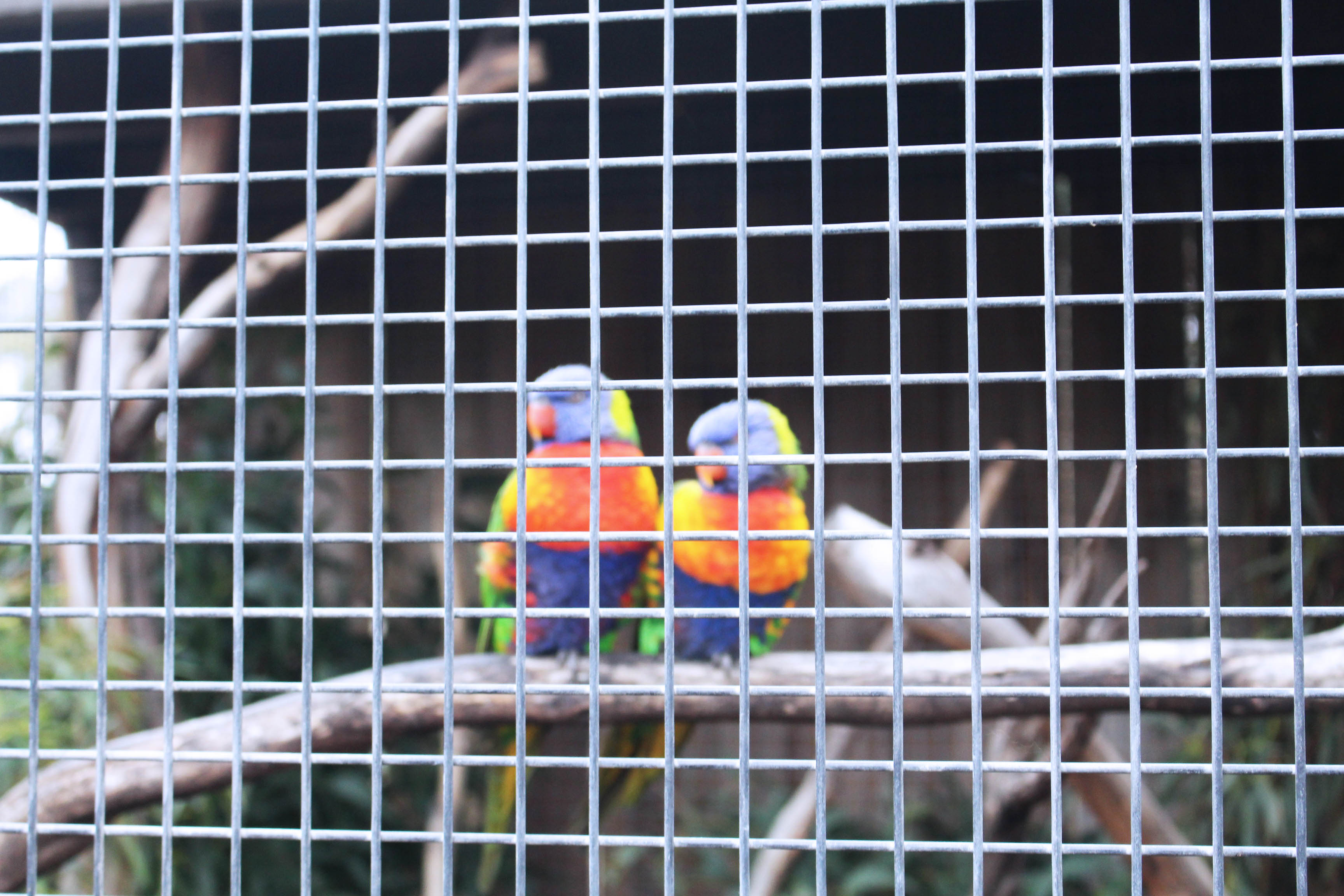 bonorongbirds