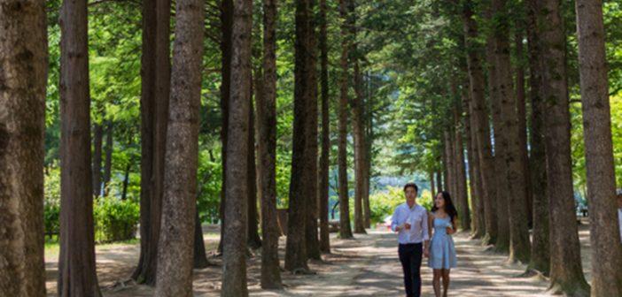Summer Sonata in South Korea