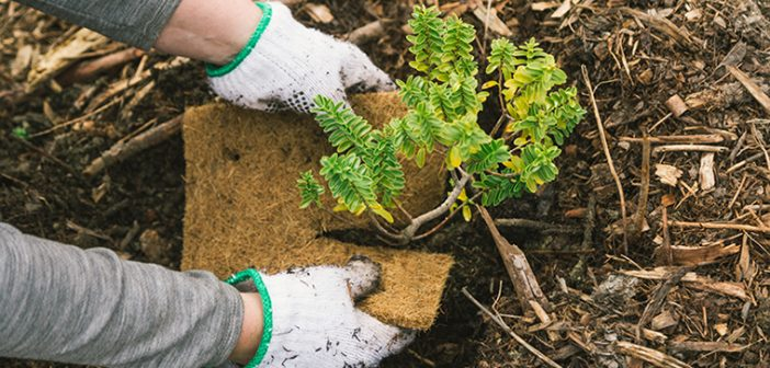 Plant a Tree in New Zealand to Welcome the New Year